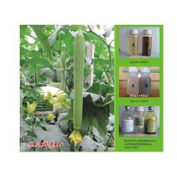 山东信誉好的丝瓜蘸花药生产基地——供应丝瓜鲜花王
