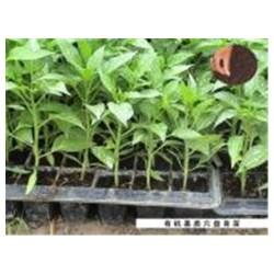 宁德温室大棚公司|供应厦门口碑好的福建育苗基质家庭栽培土